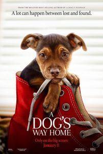 دانلود فیلم مسیر بازگشت یک سگ به خانه